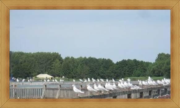 Jeziora Olsztyn atrakcje ptaki na molo.