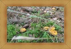 Las Olsztyn grzyby