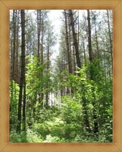 Warmia i Mazury lasy Olsztyn atrakcje przyrodnicze.