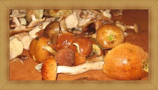 Grzybobranie Hotel Olsztyn SAK lasy sosnowe z grzybami.