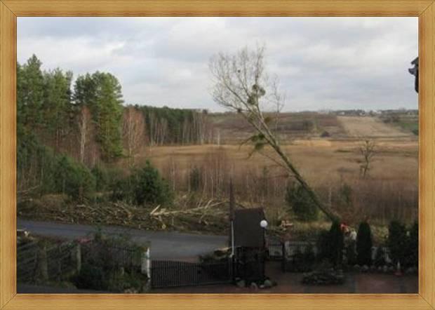 28.11.2013 roku 11 godzina 11 minut ścięto ostatnie drzewo topoli przed SAK Hotelem w Olsztynie